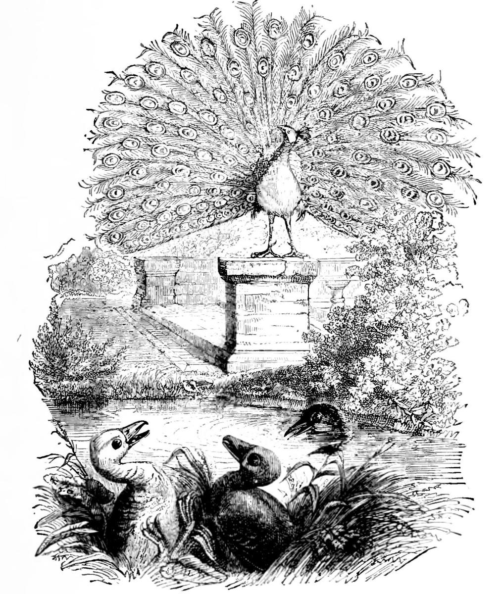 Жан Иньяс Изидор (Жерар) Гранвиль. Павлин, два Гусенка и Нырок. Иллюстрации к басням Флориана