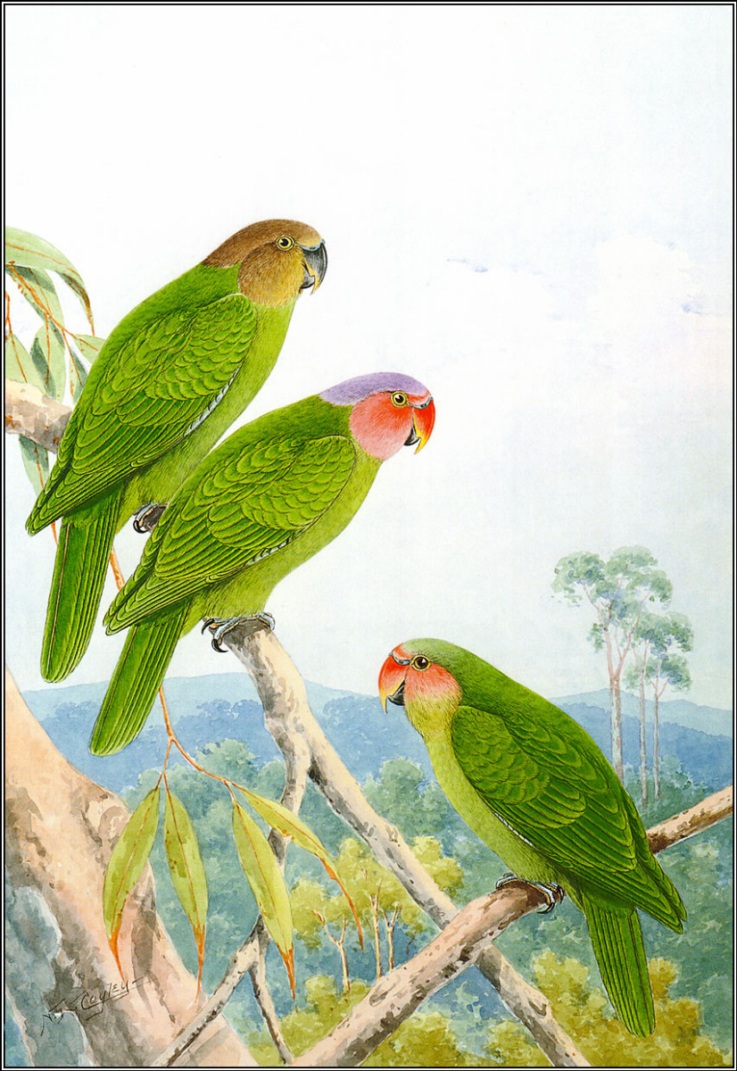 Пенни Олсен. Три попугая