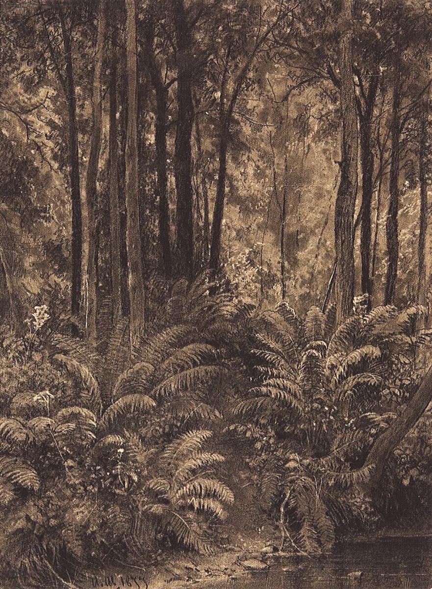Иван Иванович Шишкин. Папоротники в лесу