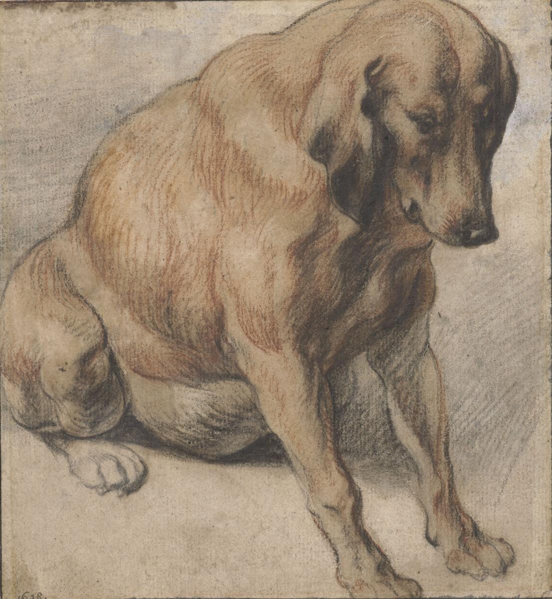 Якоб Йорданс. Sitting dog