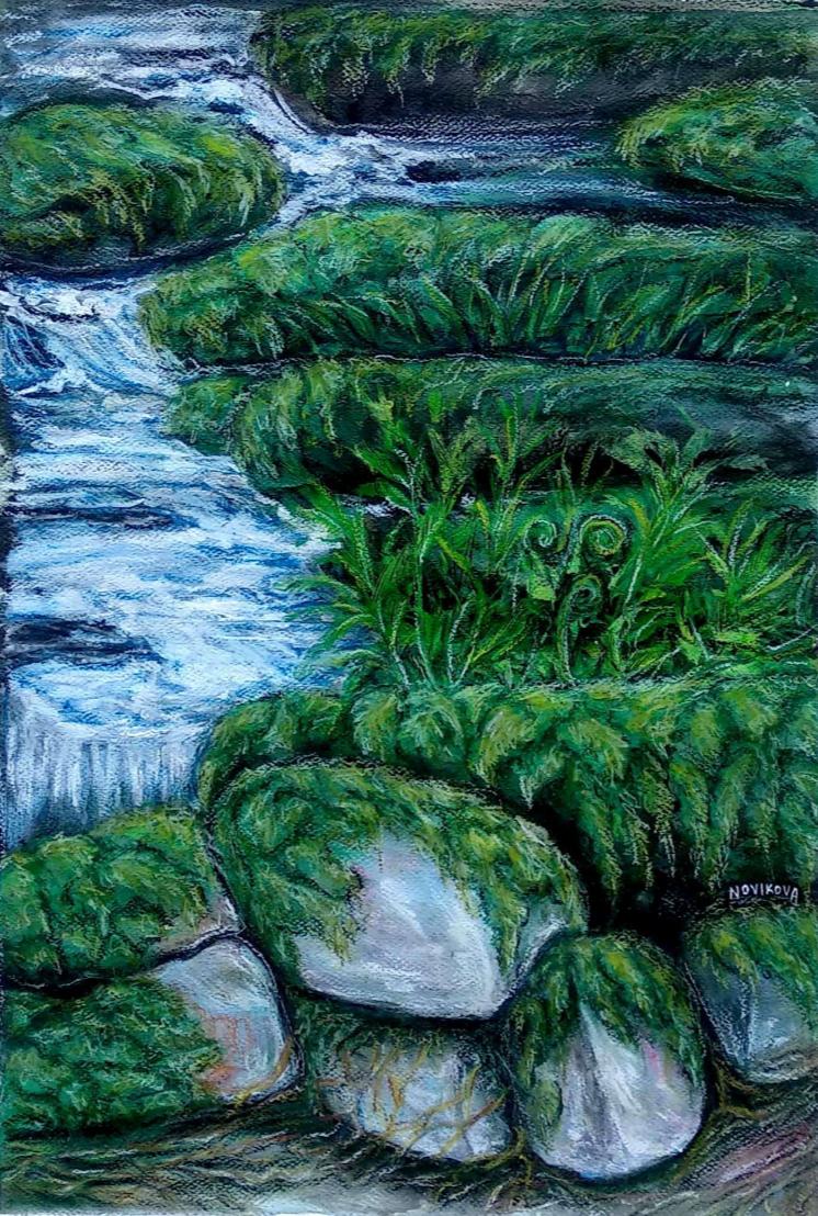 Anna V Novikova. Moss & Wood in the Wet Forest