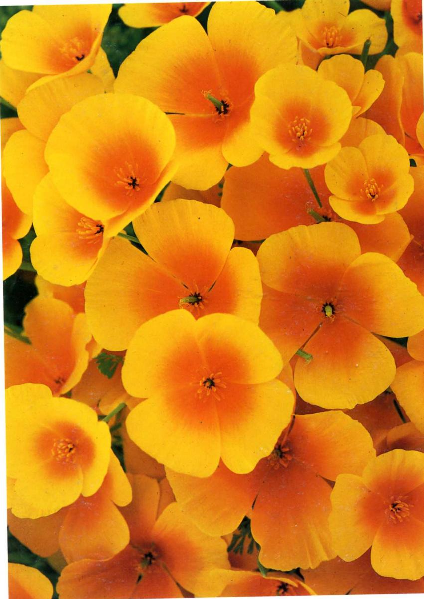 Дэвид Мюнх. Цветы