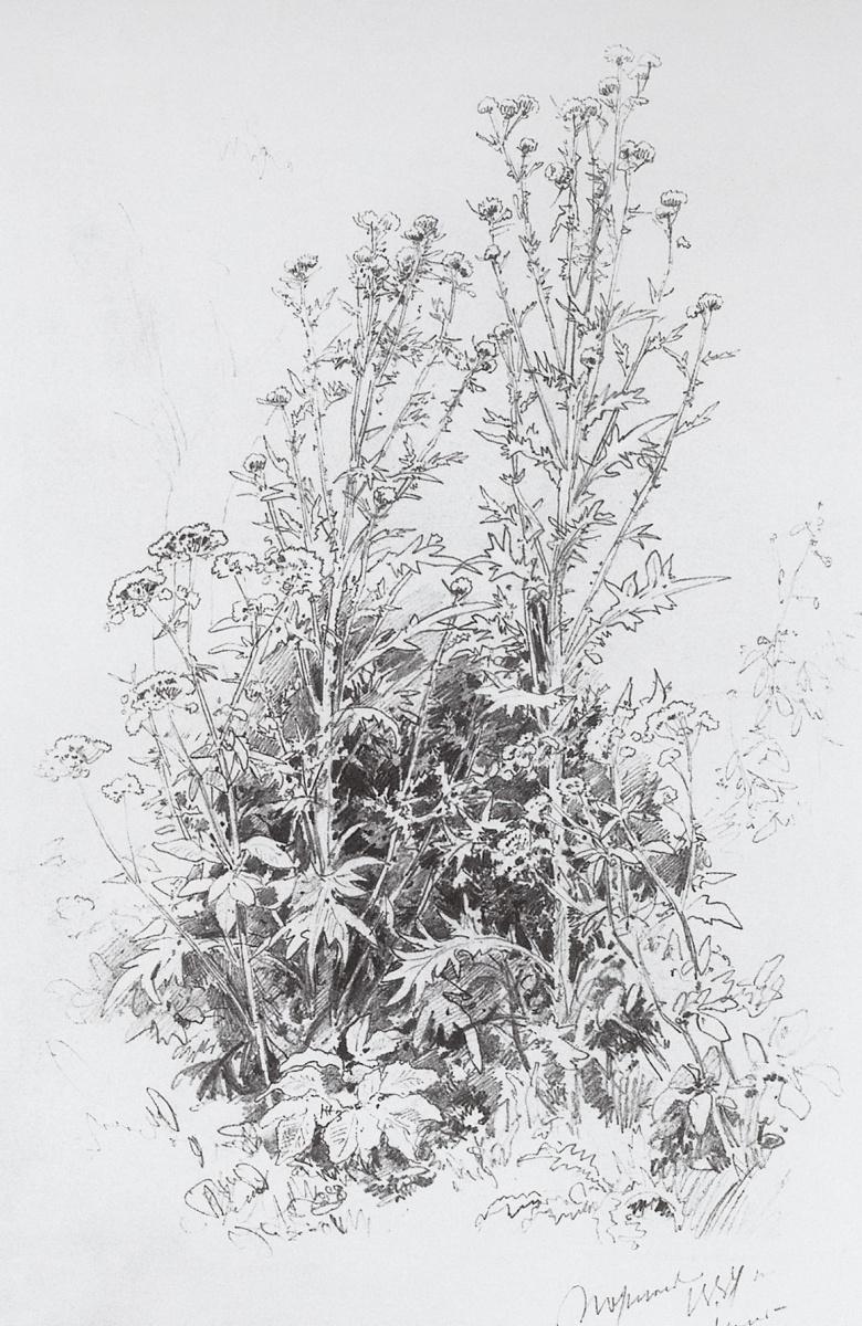 Иван Иванович Шишкин. Полевые цветы