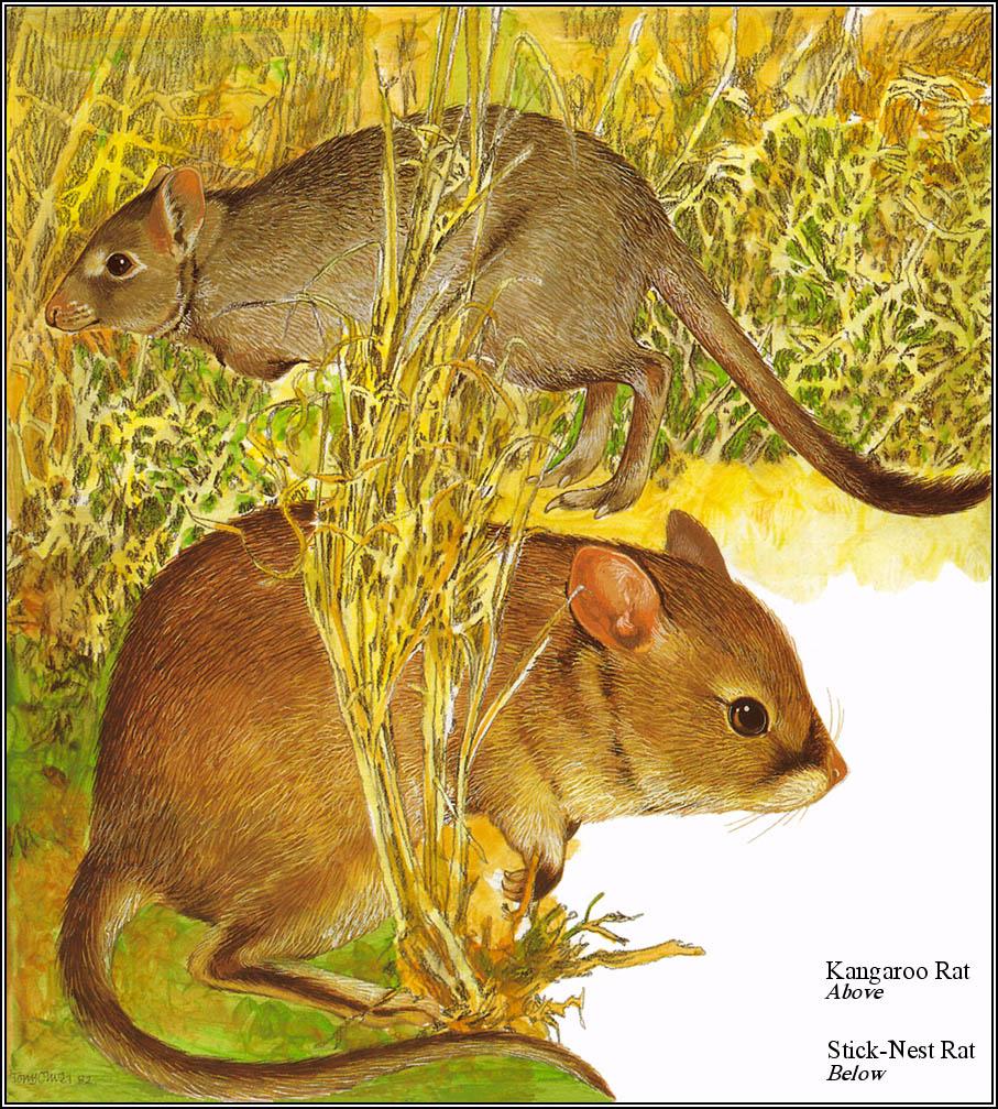 Тони Оливер. Австралийские вымирающие виды 19