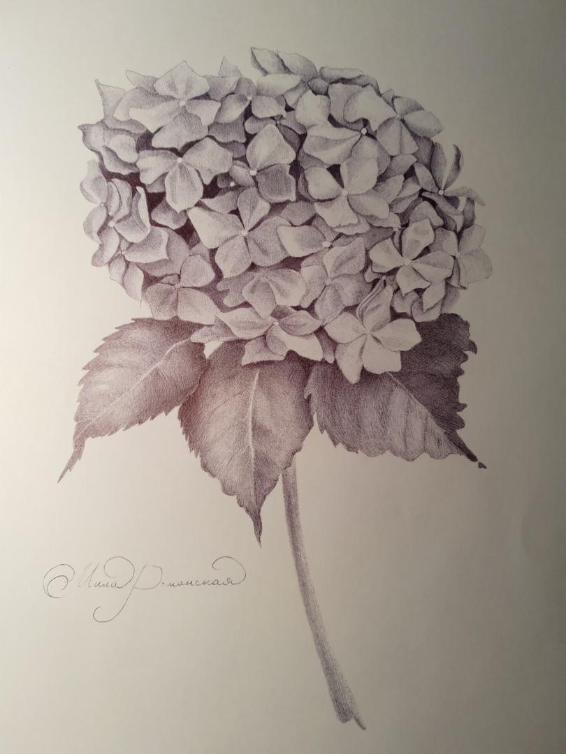 Мила Романская. Цветок