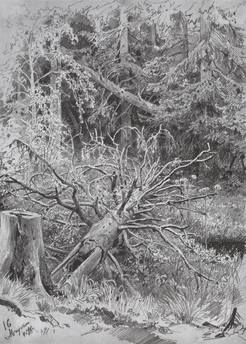 Иван Иванович Шишкин. В лесу. Упавшее дерево