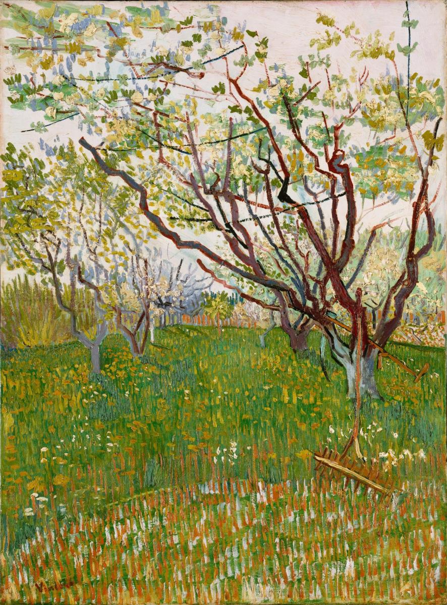 Винсент Ван Гог. Фруктовый сад в цвету