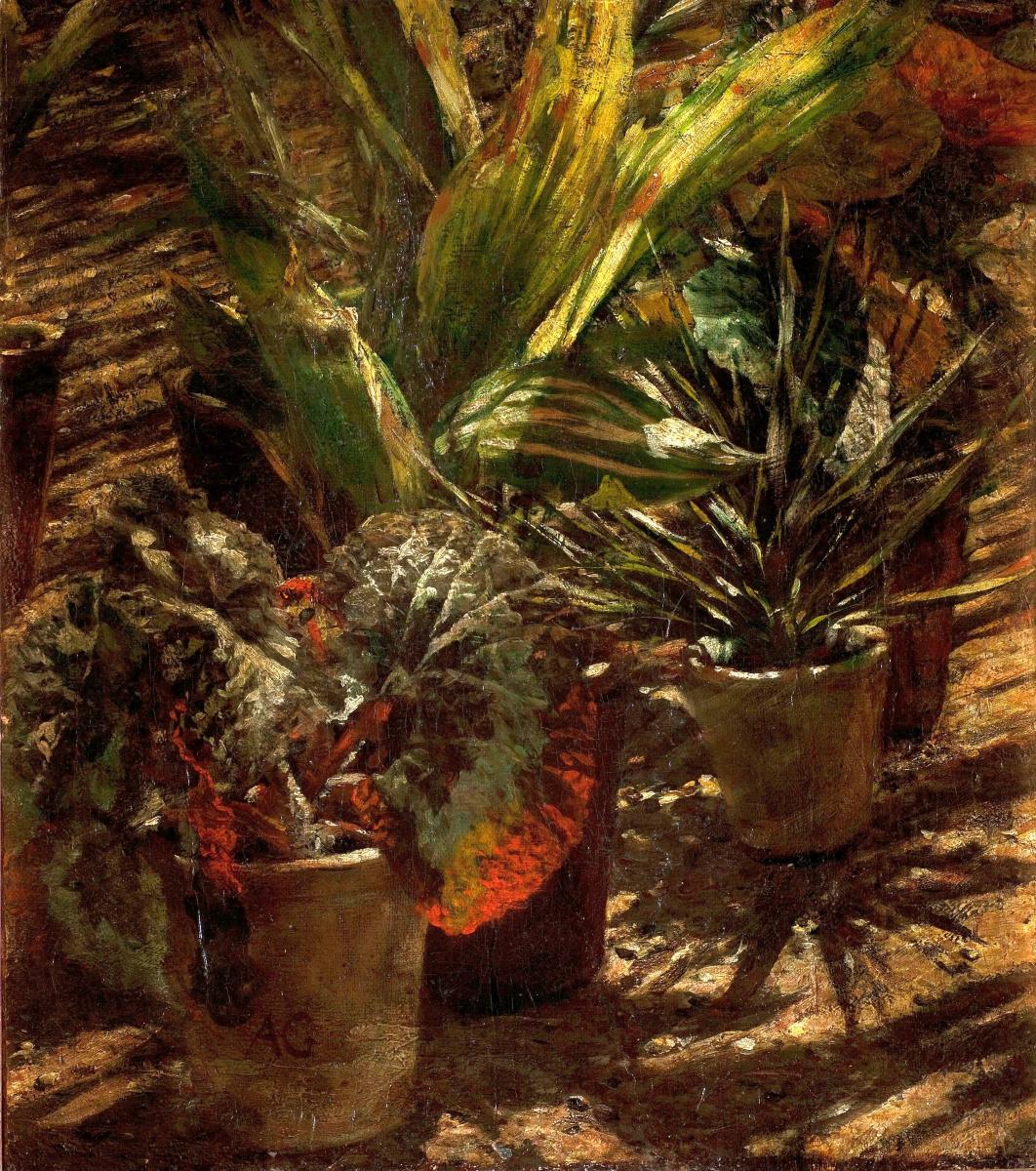 Alexander Gerymski. Begonias
