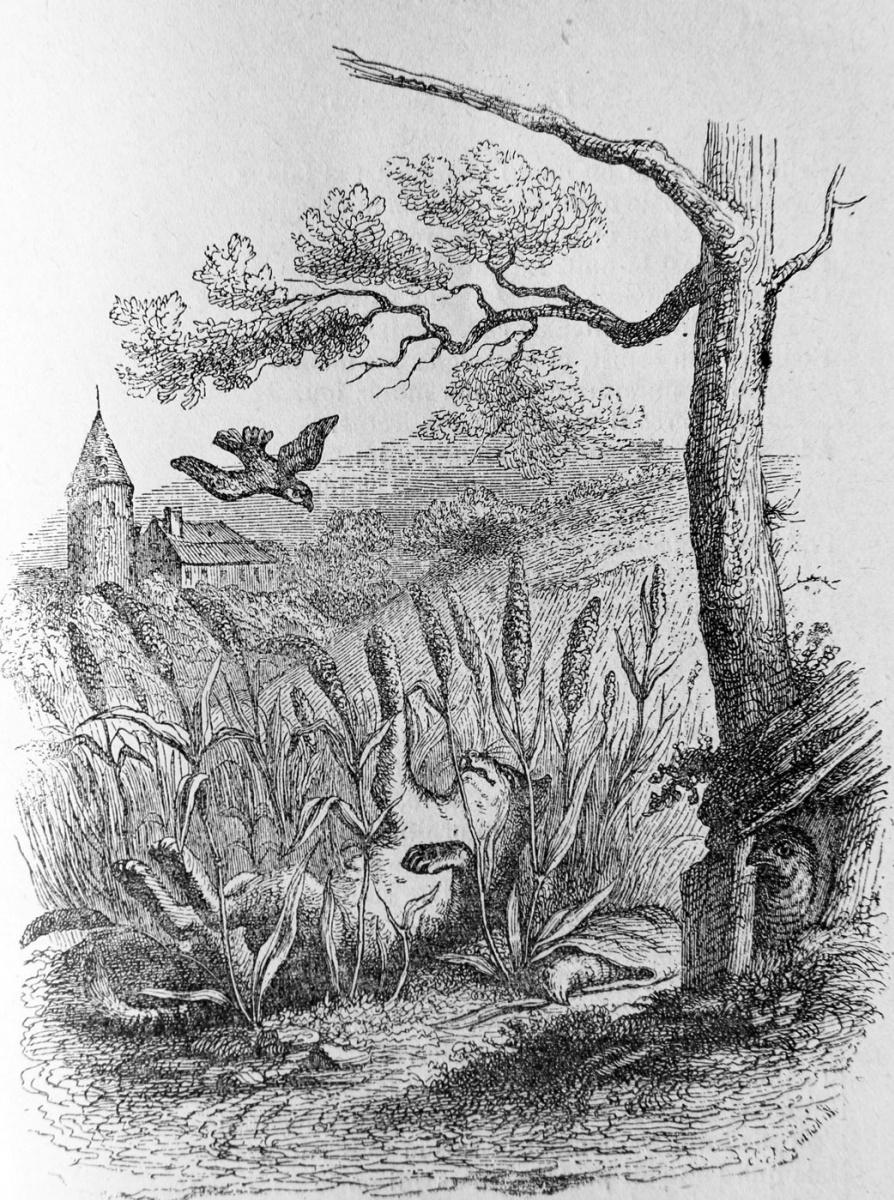 Жан Иньяс Изидор (Жерар) Гранвиль. Кот и Воробей. Иллюстрации к басням Флориана