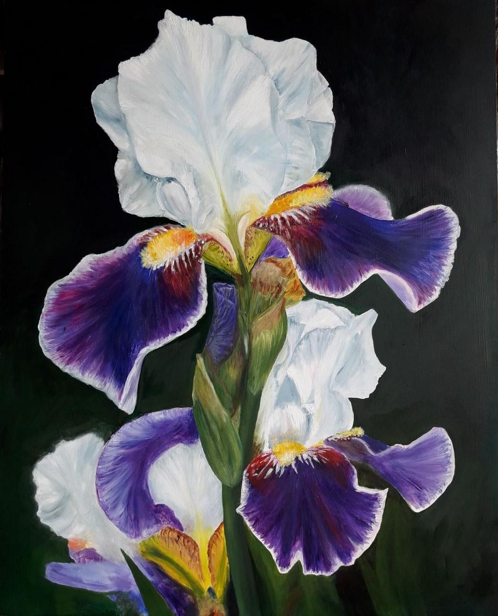 Helena. Iris in the night