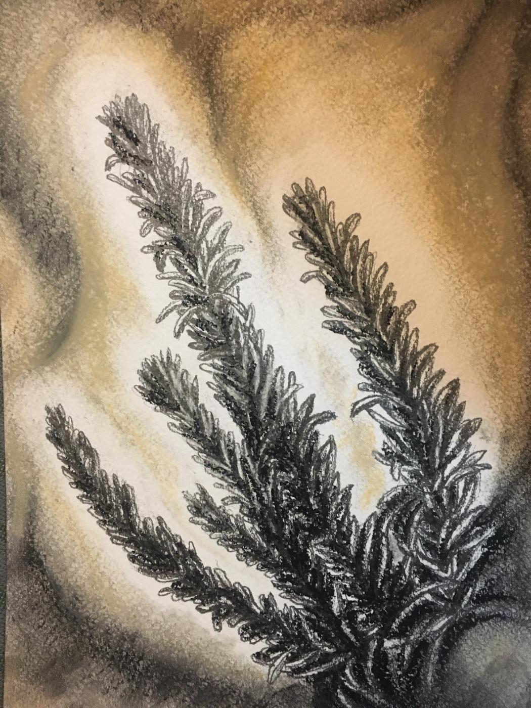 Tati_vC. Magic Herbarium-Rosemary