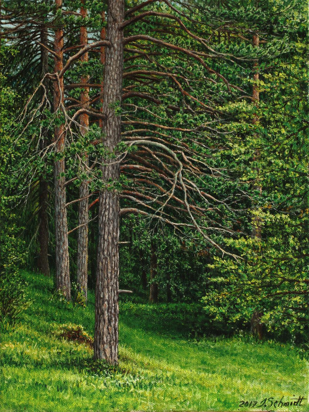 Юрген Шмидт. Alpine pines