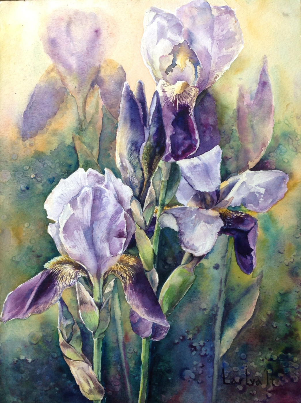 LarIva LarIva. Irises