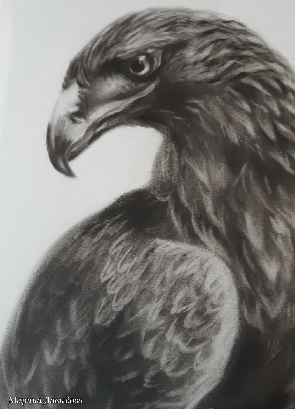Марина Давыдова. Беркут (Aquila chrysaetus)