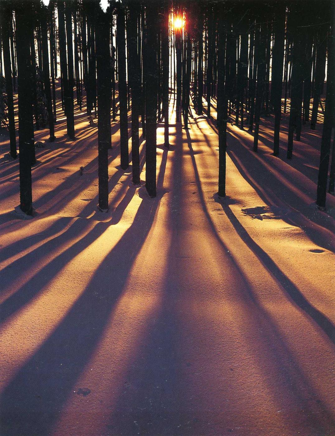 David Munich. Sunlight through the trees