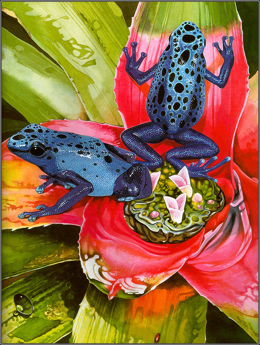Toni Oliver. Frogs sing songs 03