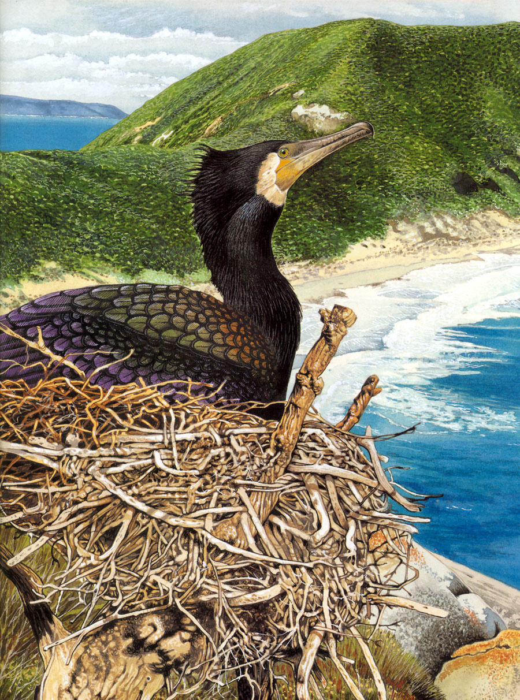 Toni Oliver. The bird on the shore