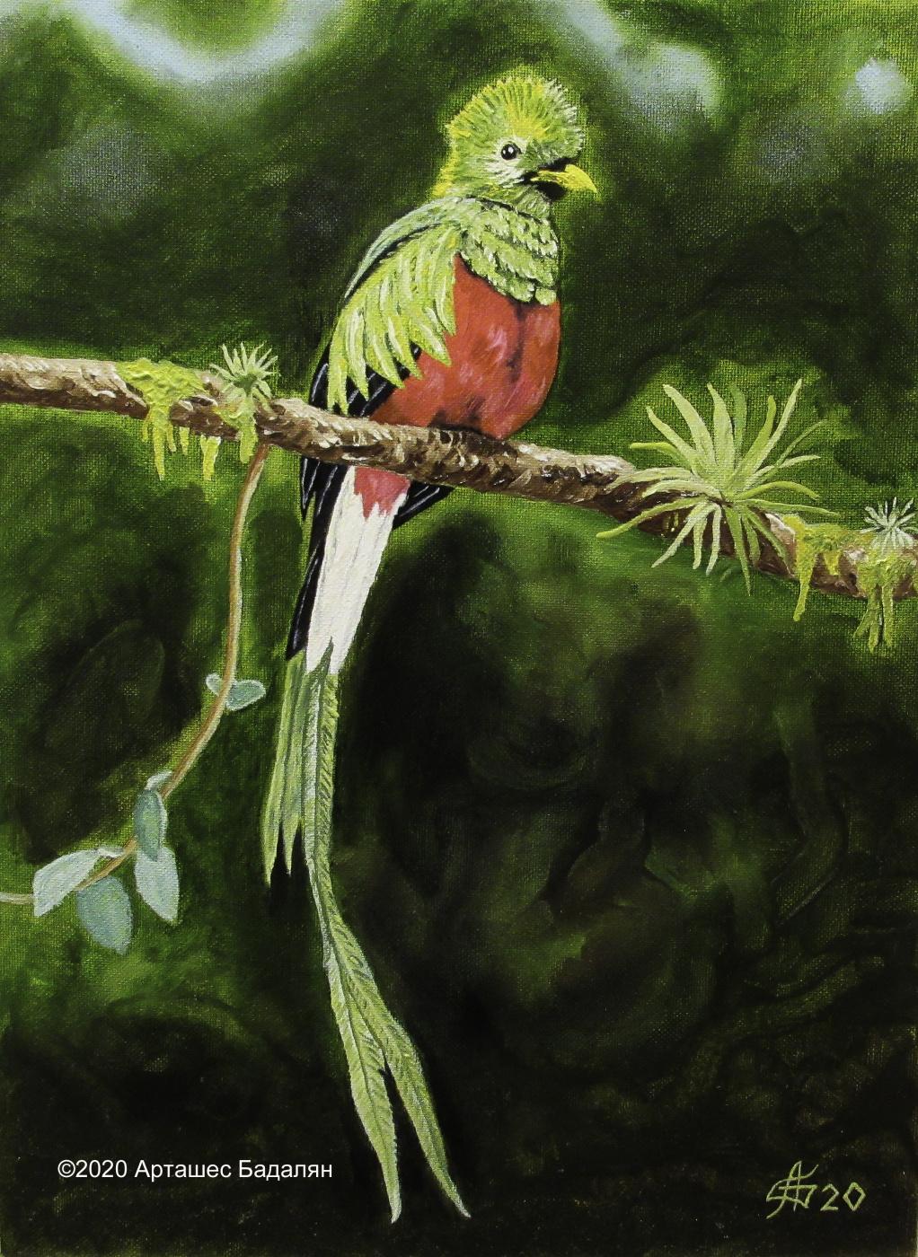 Artashes Badalyan. Quetzal - x-hardboard-m - 40x30