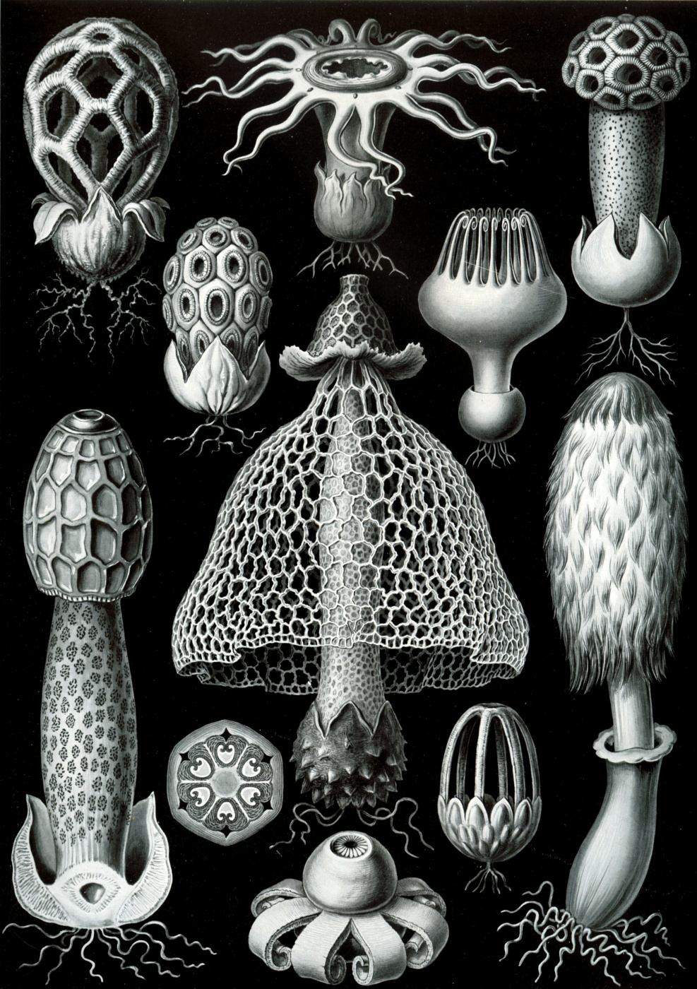 """Ernst Heinrich Haeckel. Basidiomycetes (Basidiomycetes). """"The beauty of form in nature"""""""