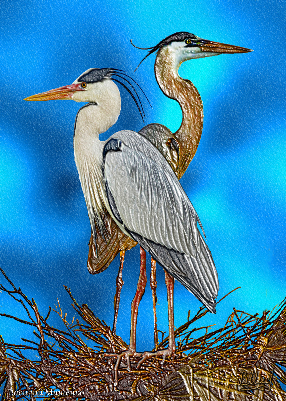 Vasiliy Mishchenko. Herons in the nest