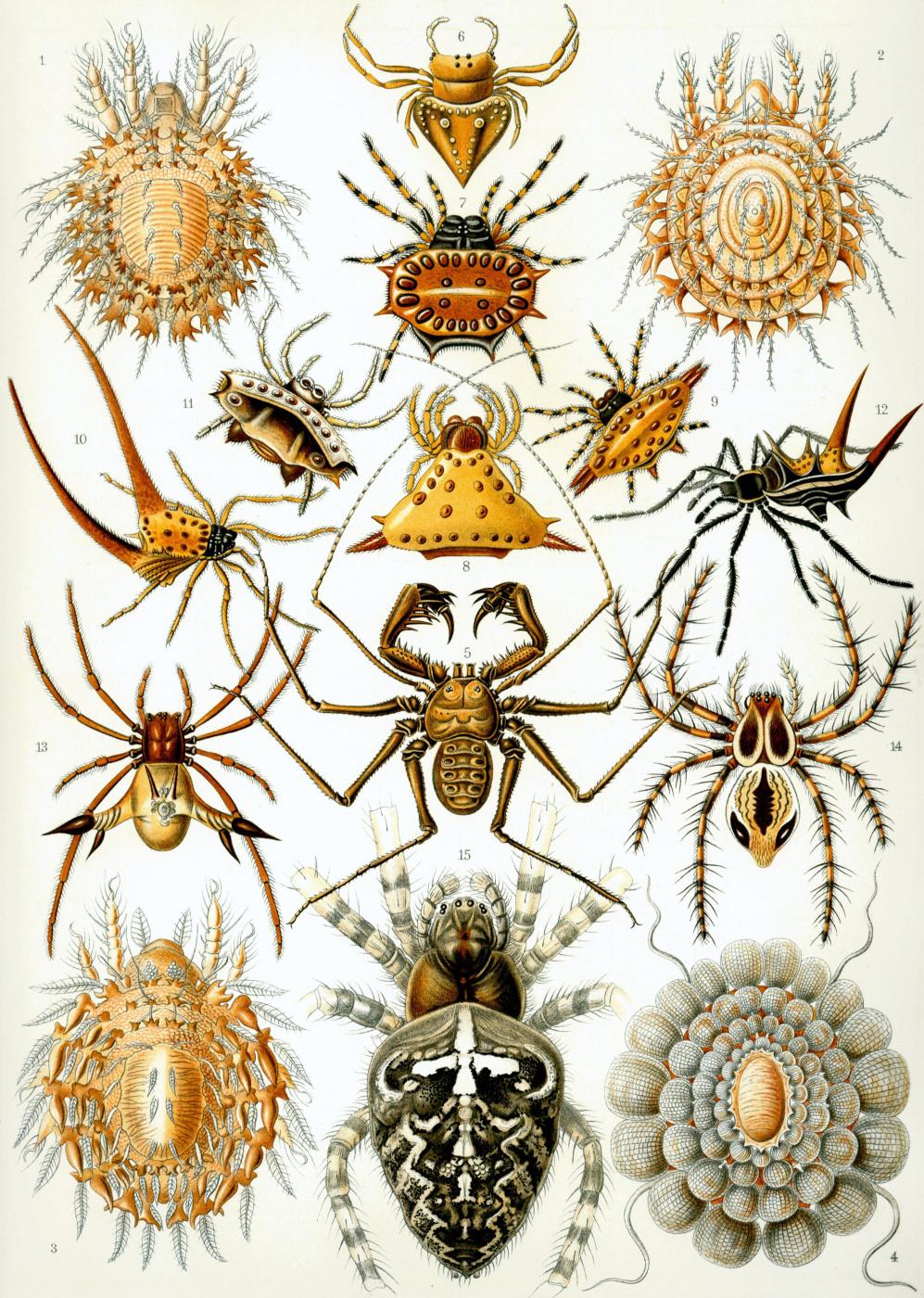 "Ernst Heinrich Haeckel. Arachnids (Arachnids). ""The beauty of form in nature"""