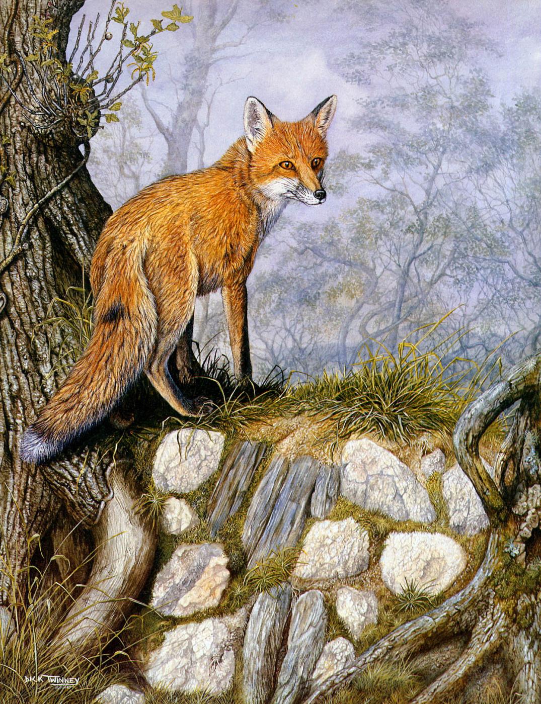 Dick Twinney. Nature 019