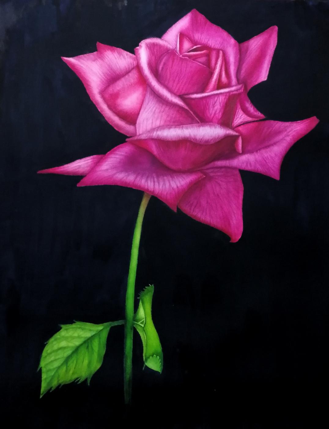 Alyona Anichkina. Rose on black
