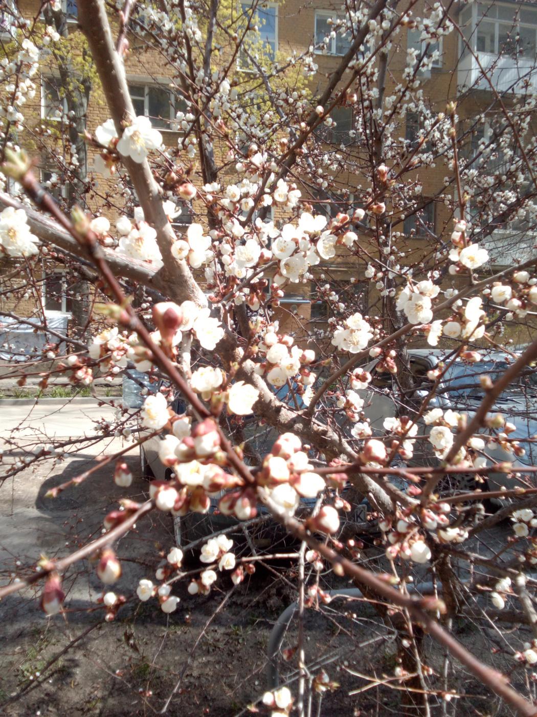 "Alexey Grishankov (Alegri). ""Spring Blizzard"""