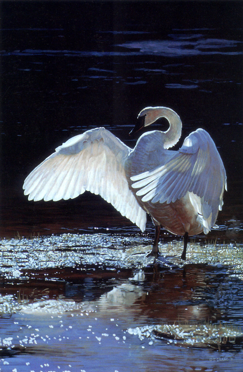 Terry Isaac. White wings