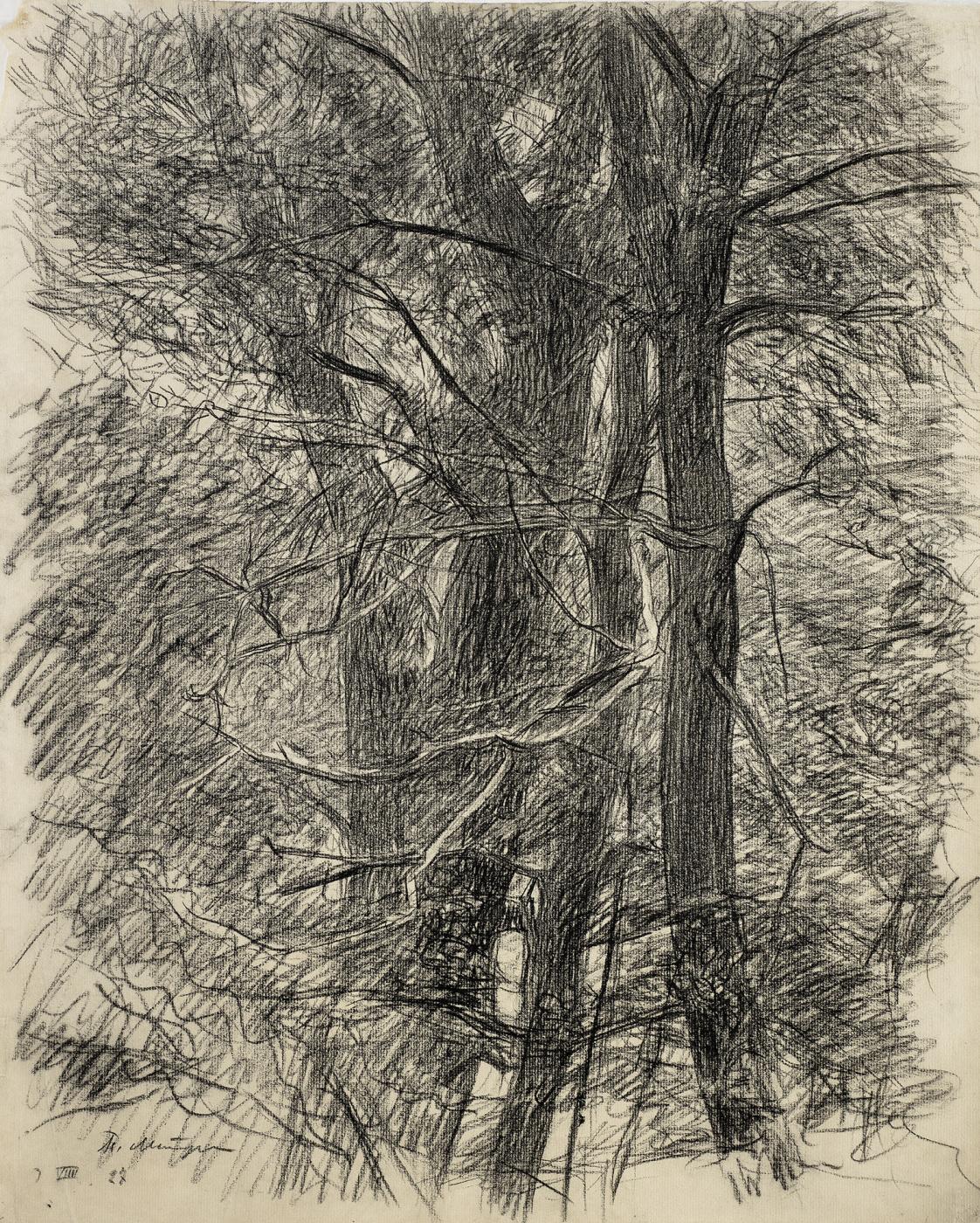 Petr Vasilyevich Miturich. Oak trees