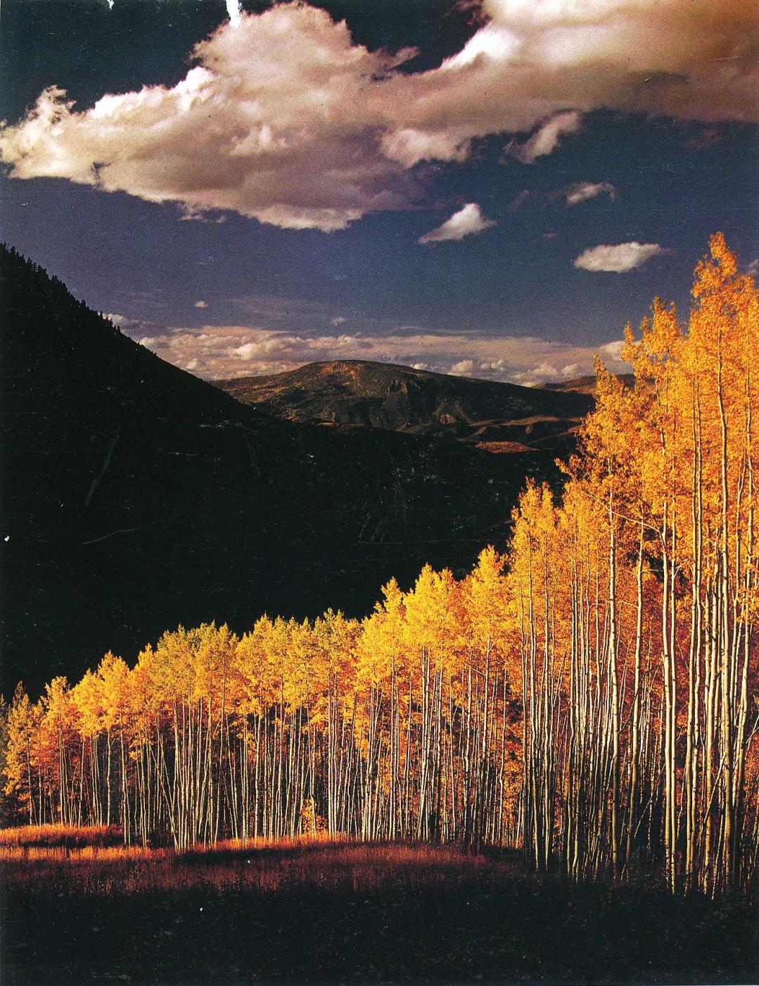 David Munich. Golden autumn
