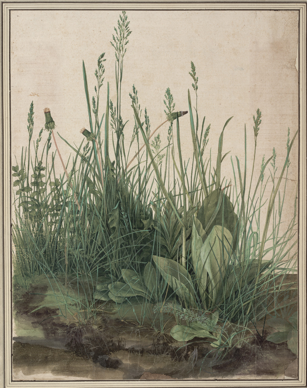 Albrecht Dürer. The large piece of turf