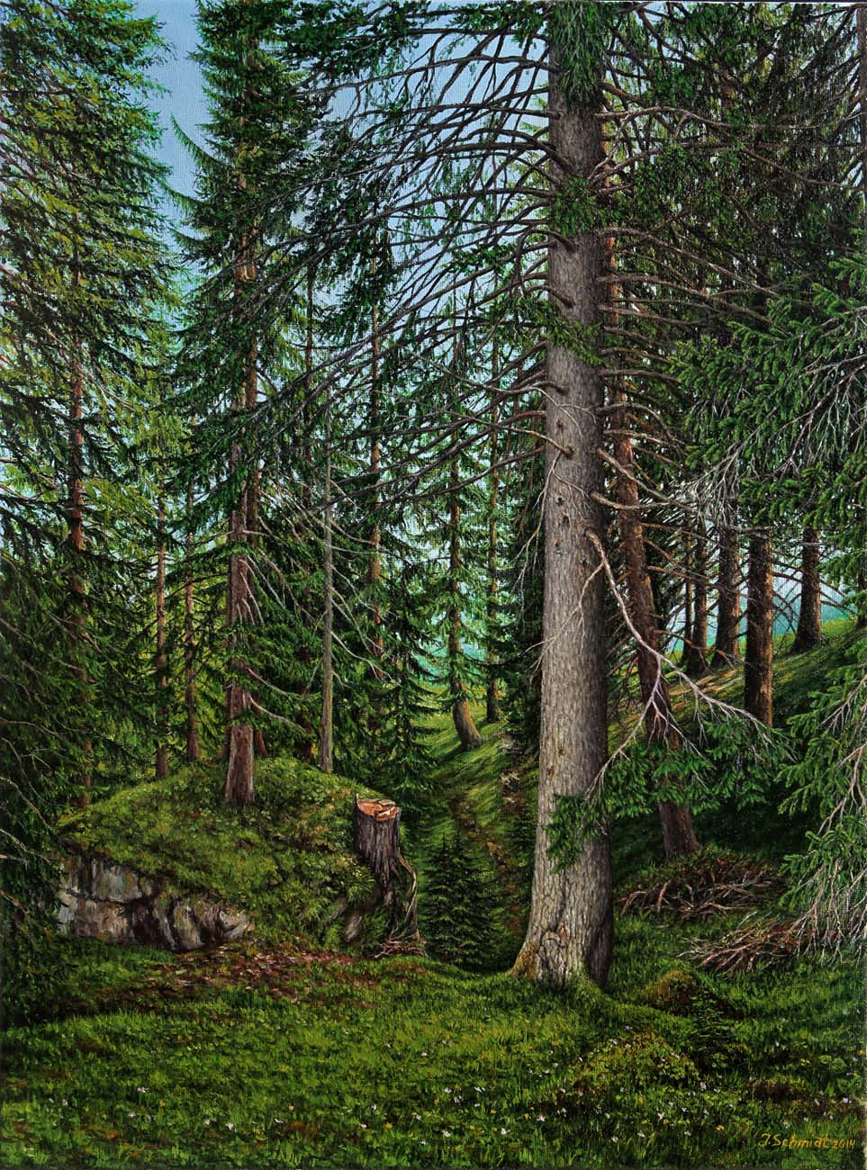 Юрген Шмидт. Coniferous forest. Austria