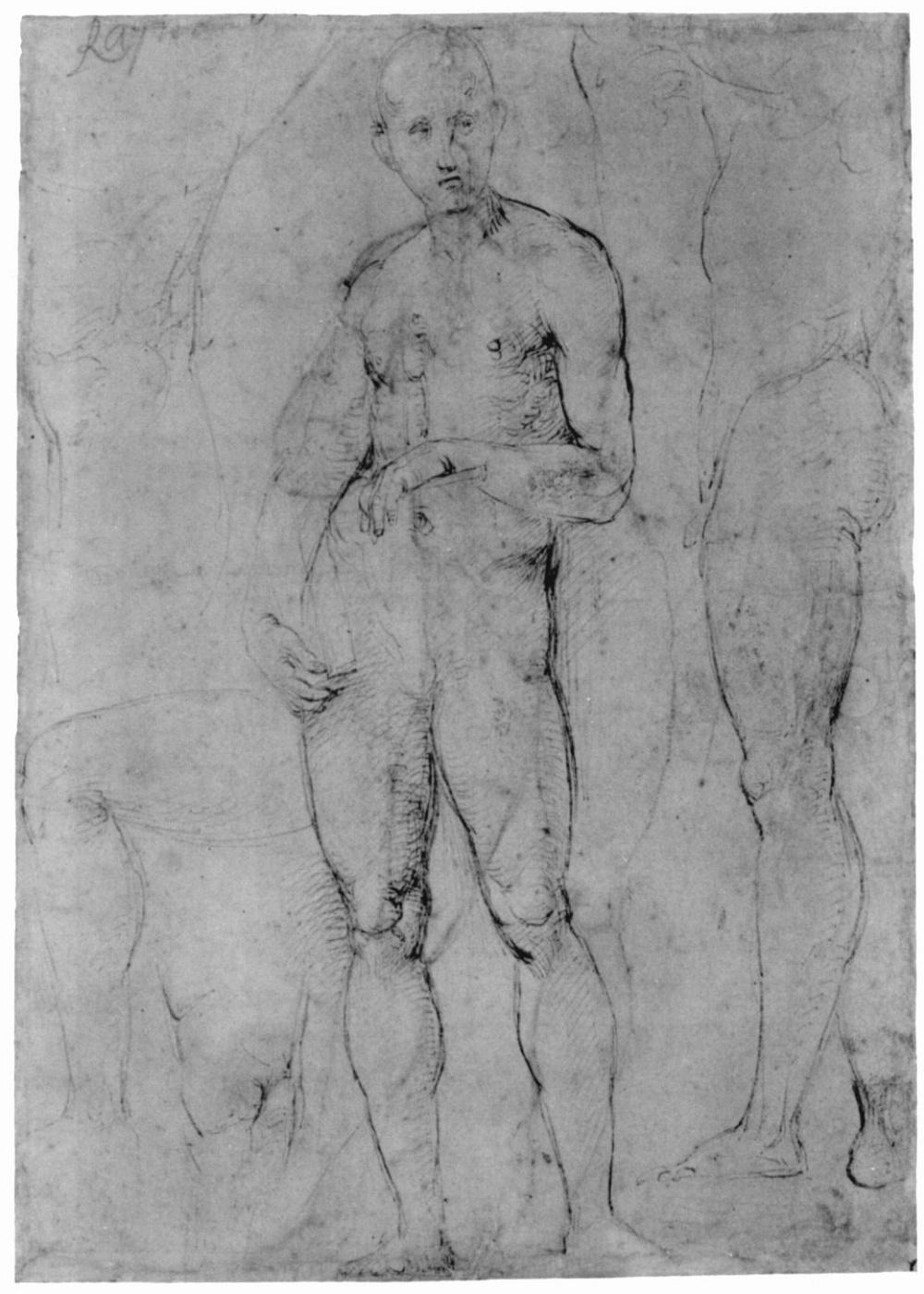 Raphael Santi. Study of a Nude male figure