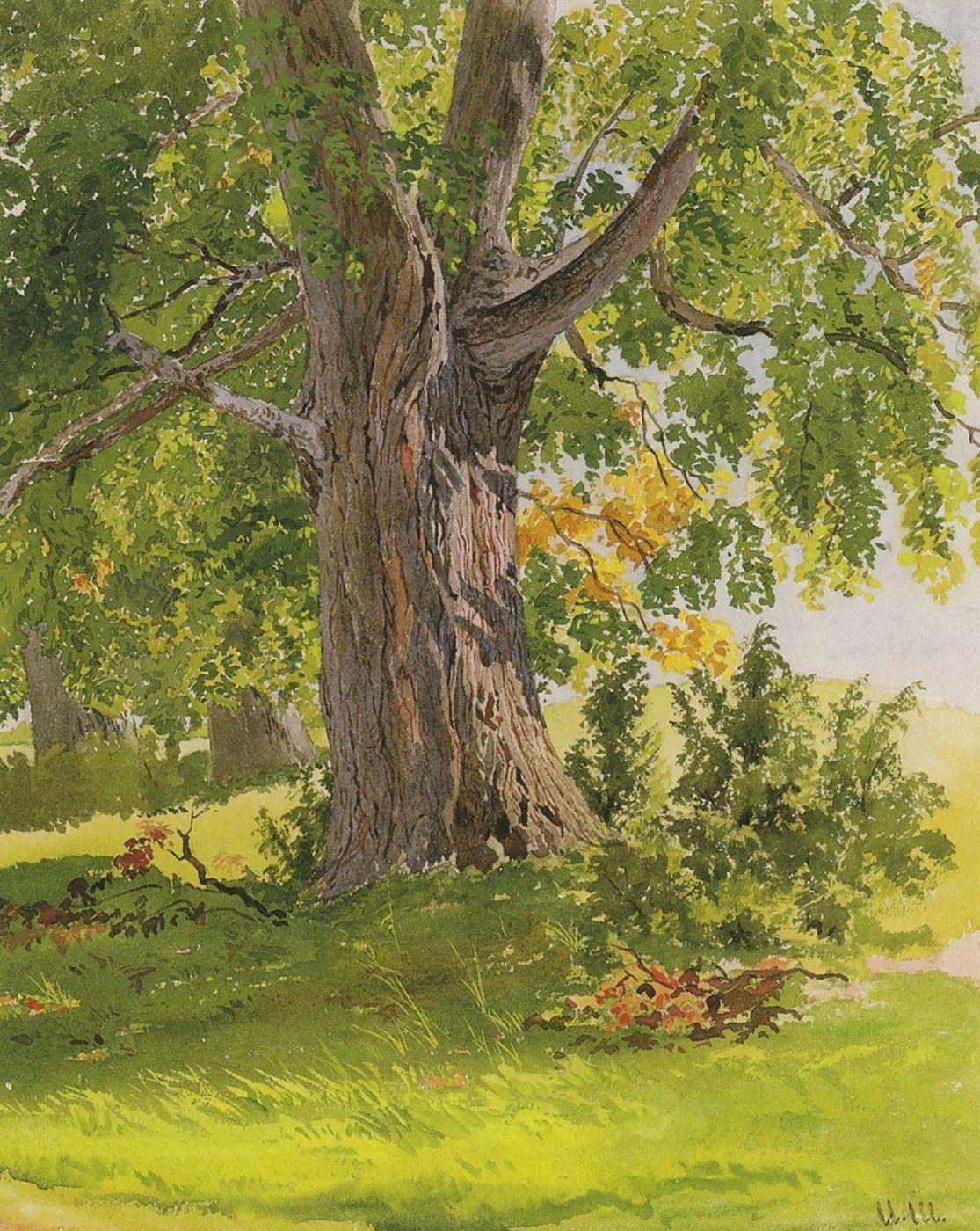 Ivan Ivanovich Shishkin. Oak, lit by the sun