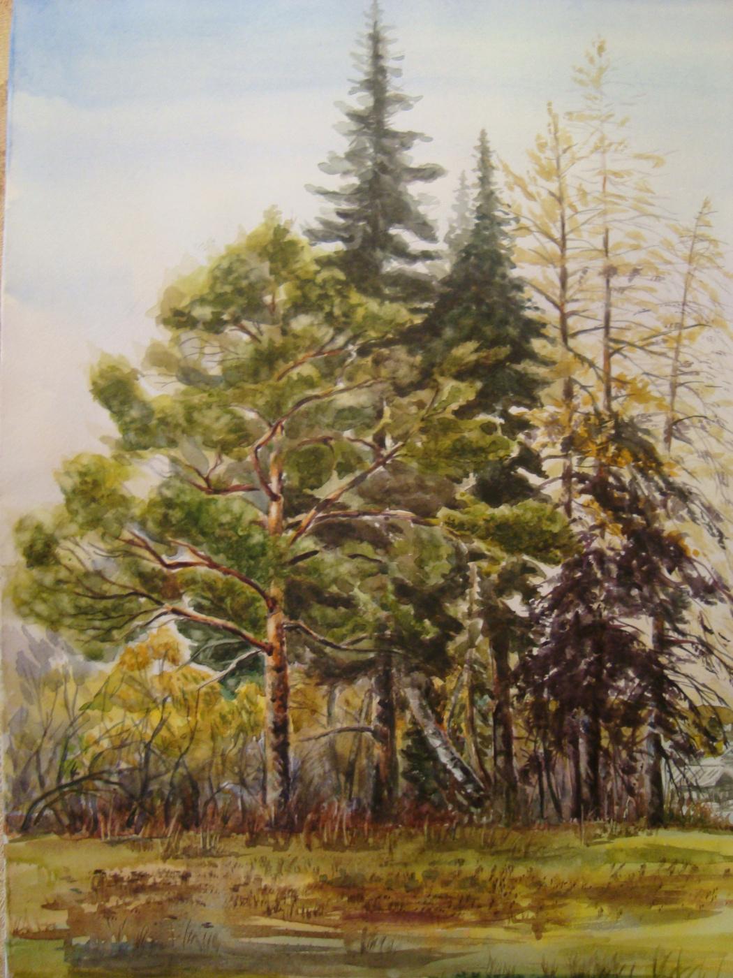 Valentina Ushakova. Autumn pines