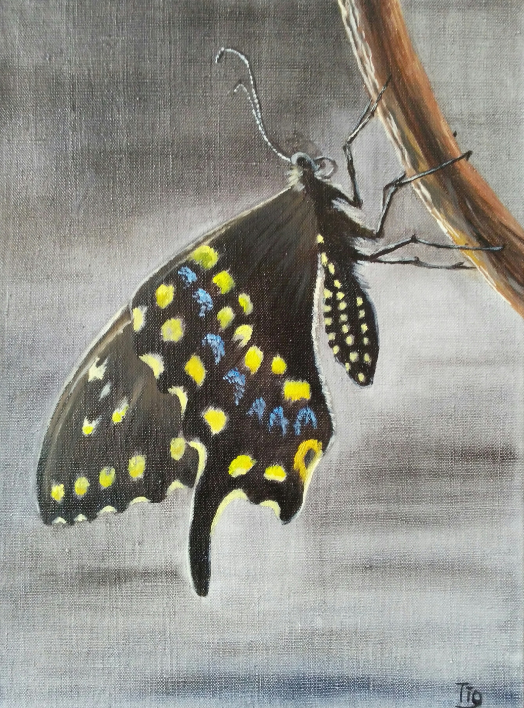 Olga Nadtochaeva. Butterfly