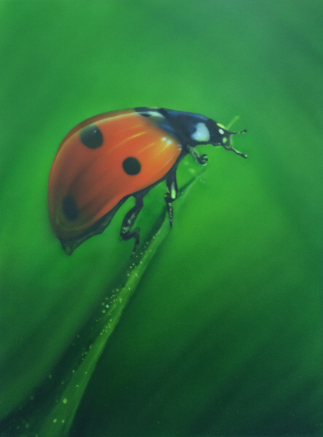"""Khristina Igorevna Belousova. Airbrushing """"Ladybug"""""""