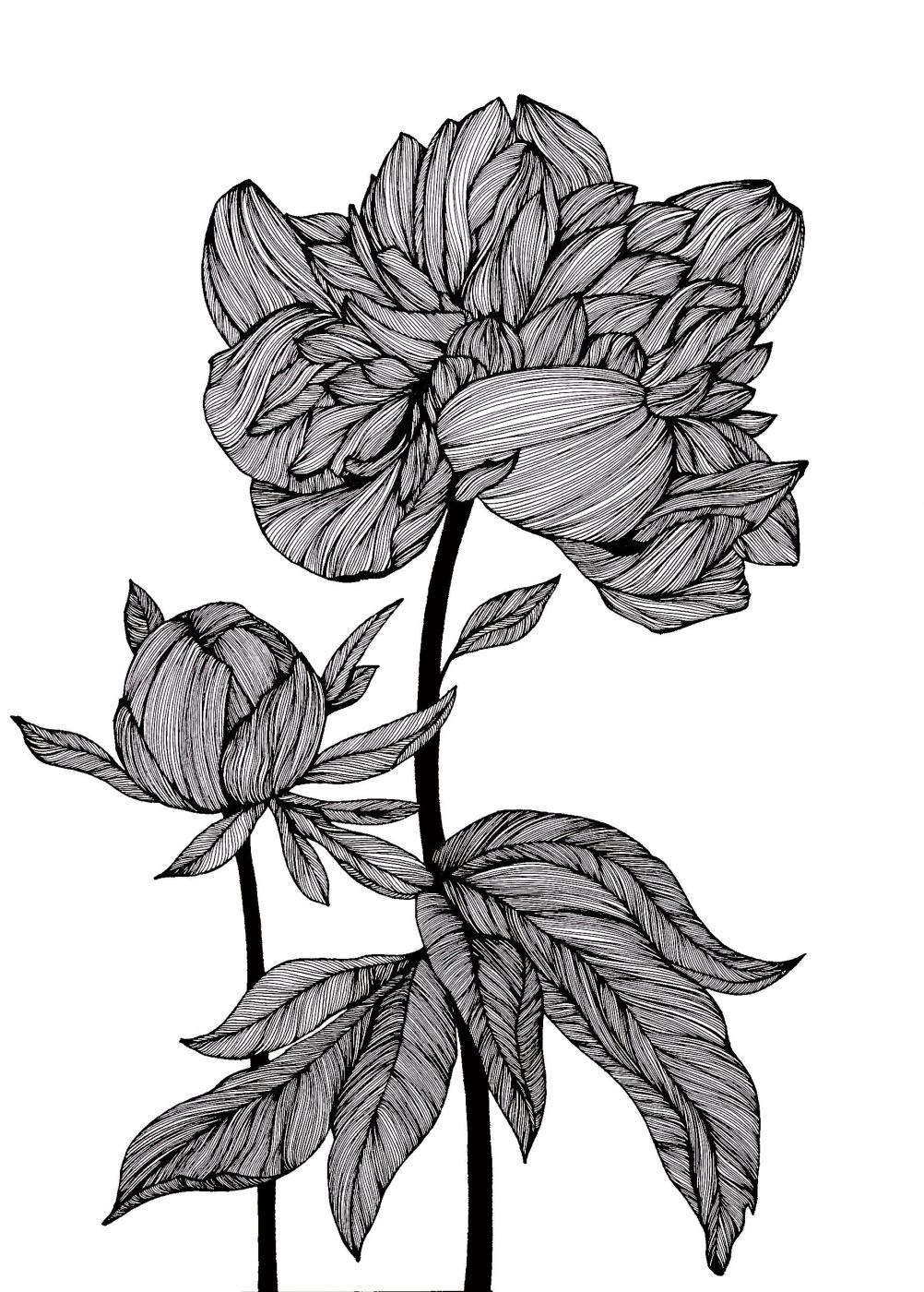 Julia Alekseevna Faberge. Peony.Graphics