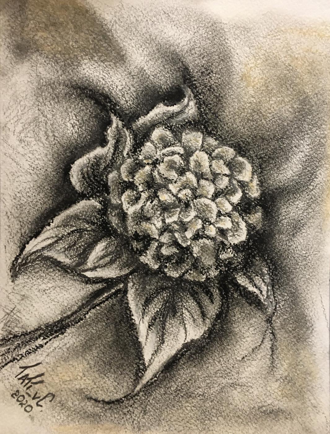 Tati_vC. Magic Herbarium - Hydrangea