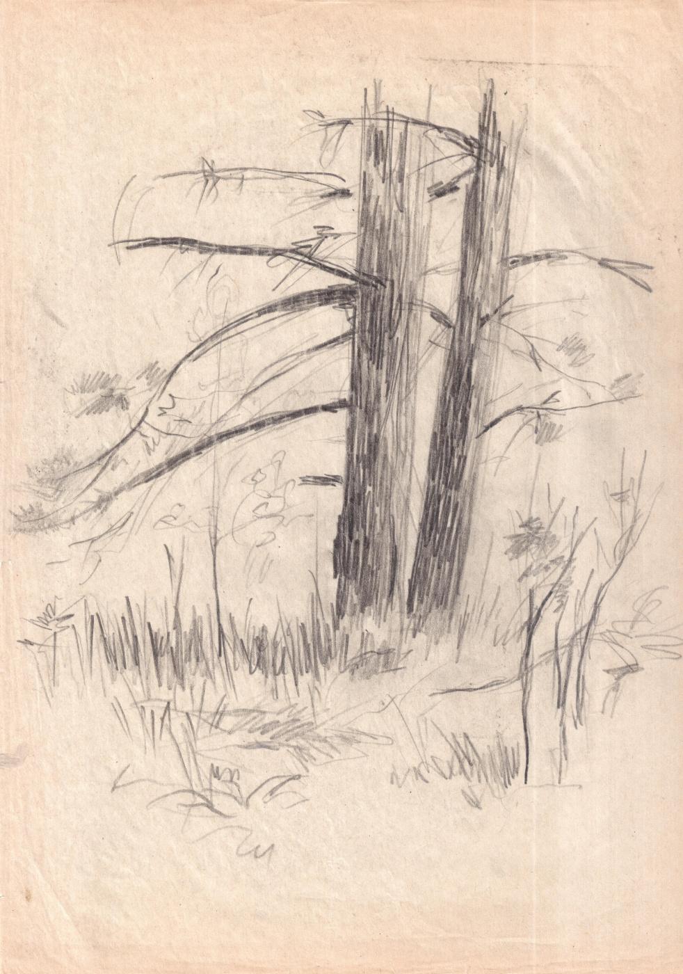 Arkady Pavlovich Laptev. Sketch of trees