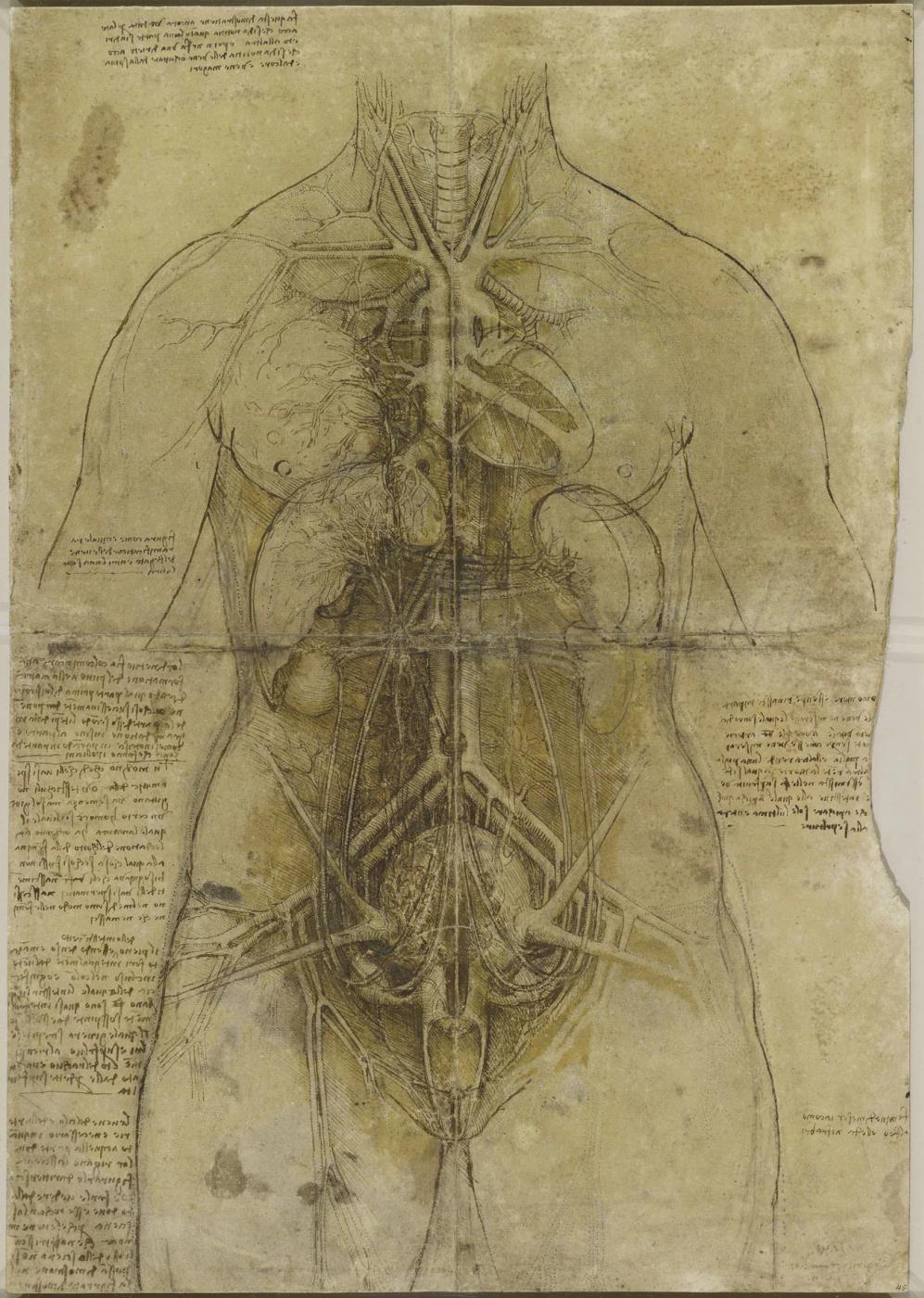 Leonardo da Vinci. Cardiovascular system and main organs of a woman