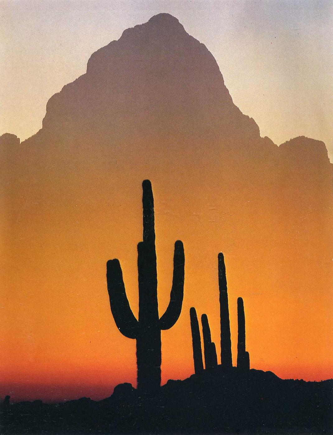 David Munich. Cacti at sunset