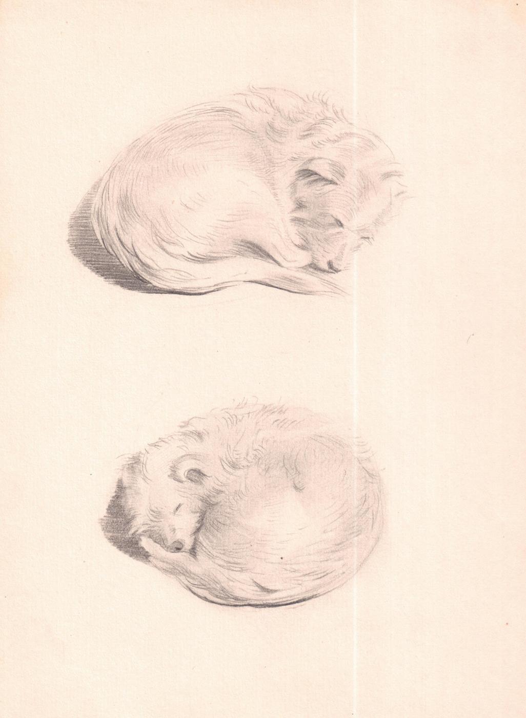 Arkady Pavlovich Laptev. Sleeping dog
