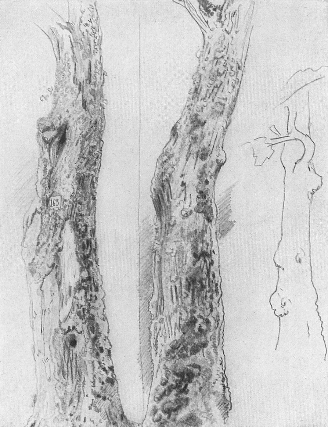 Ivan Shishkin. Sketch trunks