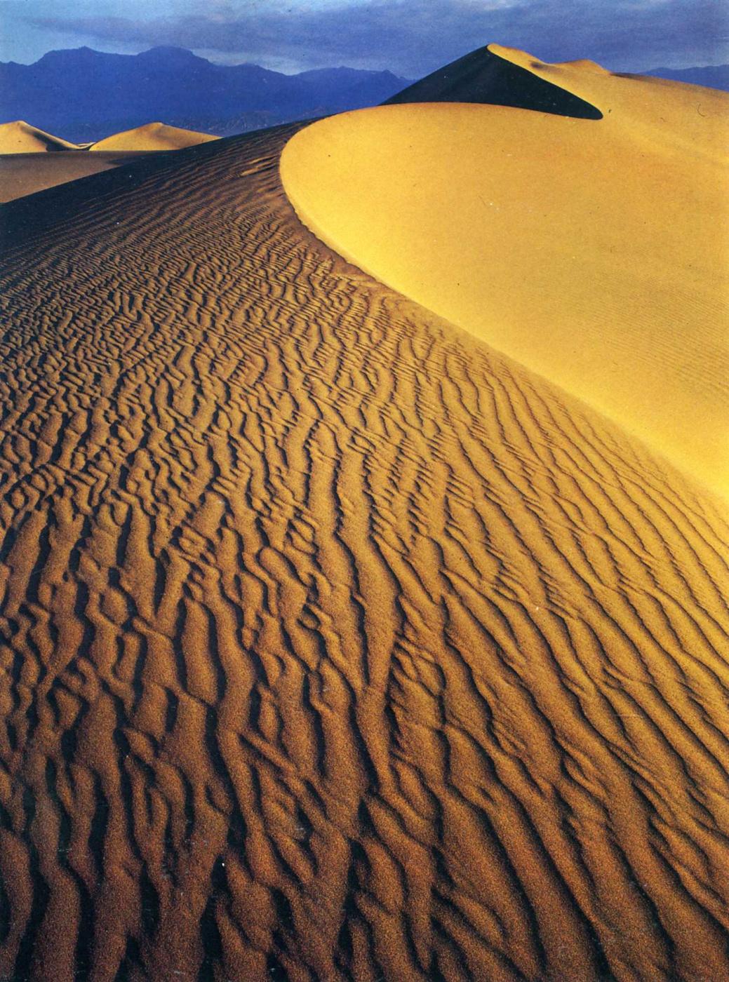 David Munich. Desert