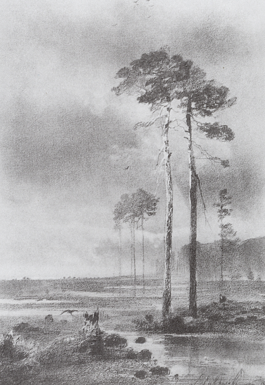 Alexey Savrasov. Pines near a swamp