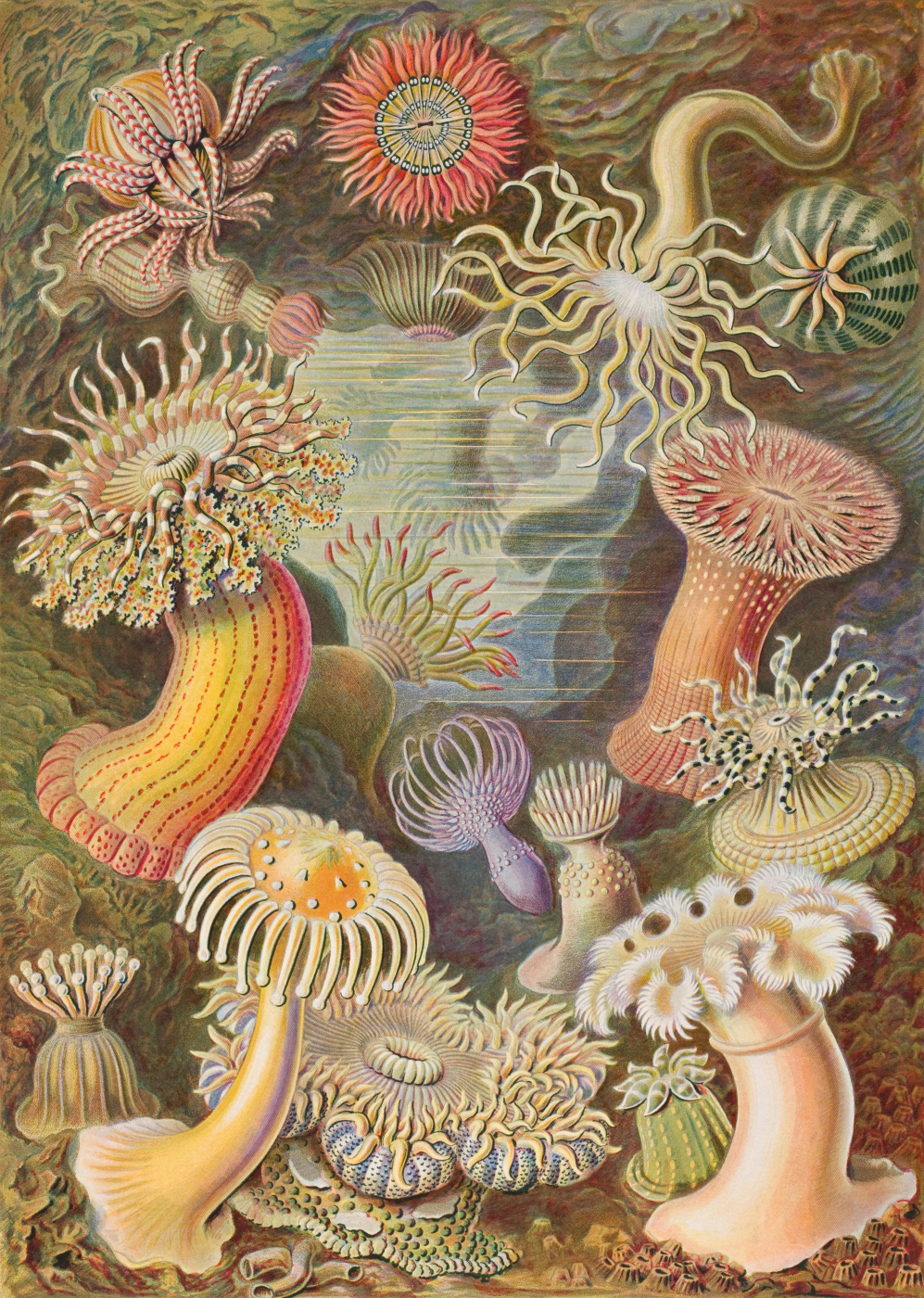 """Ernst Heinrich Haeckel. Actinia. """"The beauty of form in nature"""""""