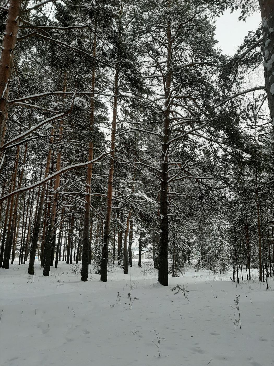 Alexandra Dainyak. Snow square