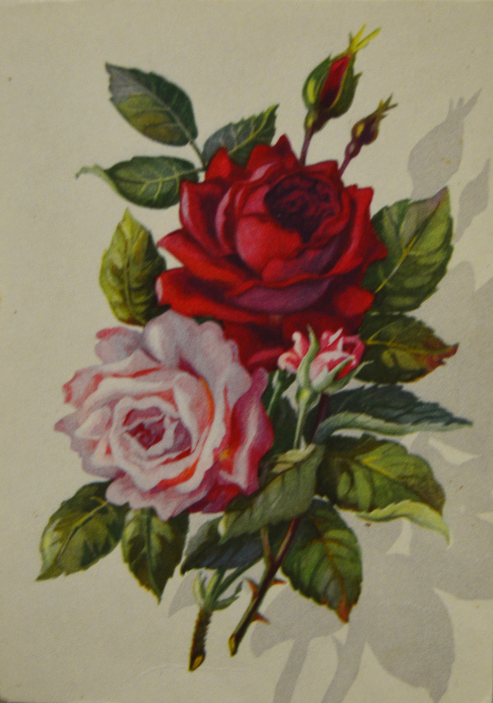 Collectible Cards. Roses